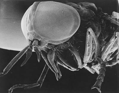 Scanning Electron Microscopic View Art Print by Darlyne A. Murawski