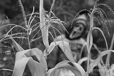 Photograph - Scarecrow In The Corn Bw by James BO Insogna