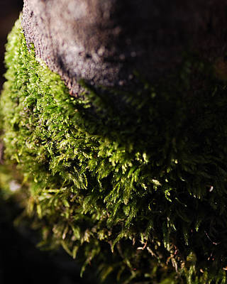 Lichen Photograph - Scarf Of Green by Susan Capuano