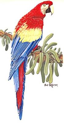 Scarlet Macaw Painting - Scarlet Macaw by Bob Patterson