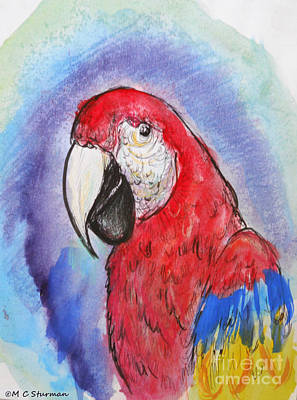 Macaw Mixed Media - Scarlet Macaw by M C Sturman
