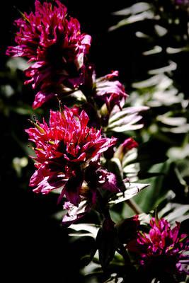 Phlox Photograph - Scarlet Paintbrush by David Patterson