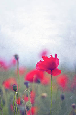 Scarlet Poppies In Painterly Style Art Print by Image by Catherine MacBride