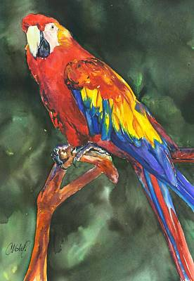 Painting - Scarlett Macaw Parrot by Christy Freeman Stark