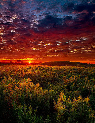 Scarlett Art Print by Phil Koch