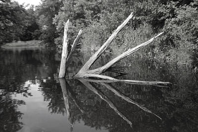Scenes From The Kayak    Downed Trees Of The Ec River Back Waters Art Print by Artist Orange