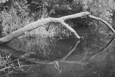 Photograph - Scenes From The Kayak.   Downed Trees Of The Ec River Back Waters Part 2 by Artist Orange