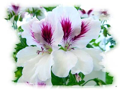 Photograph - Scented Geraniums 2 by Will Borden
