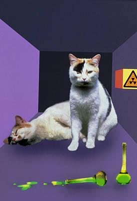 Schrodinger's Cat Experiment Art Print by Mehau Kulyk