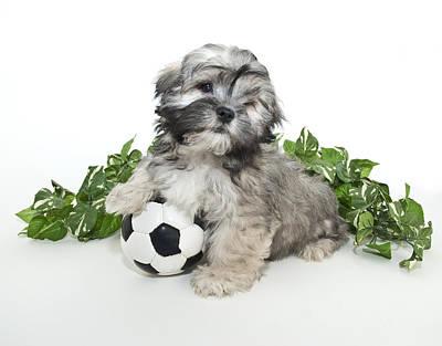 Scoccer Puppy Art Print by StockImage