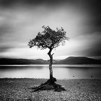 Raining Photograph - Scotland Milarrochy Tree by Nina Papiorek