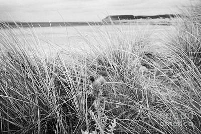 Scots Spear Thistle Growing Wild At Sandy Beach At Dunnet Bay Scotland Uk Art Print by Joe Fox