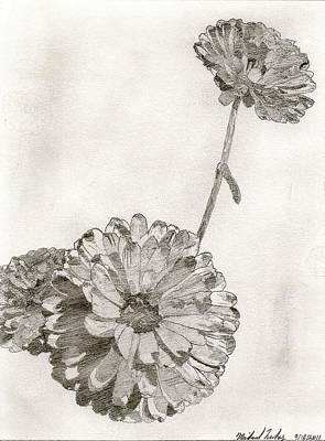 Shading On Flowers Drawing - Scottish Flowers by Michael Lukas
