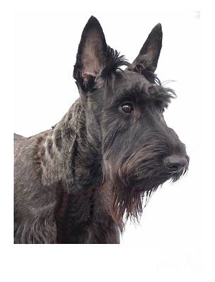 Scottish Dog Digital Art - Scottish Terrier - Scotty 184 by Larry Matthews