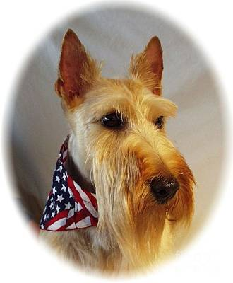 Scottish Dog Digital Art - Scottish Terrier - Scotty 353 by Larry Matthews