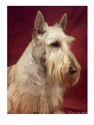 Scottish Dog Digital Art - Scottish Terrier - Scotty 94 by Larry Matthews
