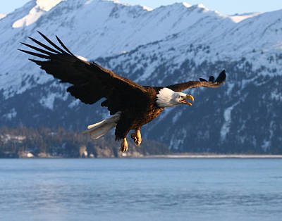 Photograph - Screaming Eagle by Doug Lloyd