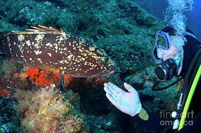 Scuba Diver With A Dusky Grouper Art Print by Sami Sarkis