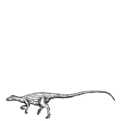 Scutellosaurus Art Print