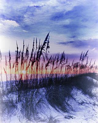 Se Oats 2 Art Print by Skip Nall