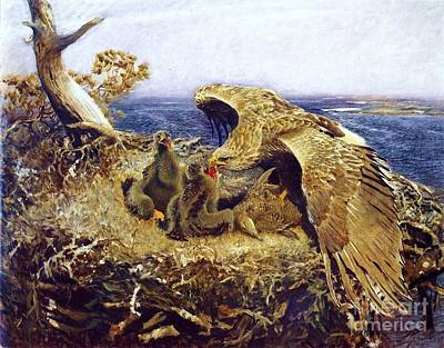 Eaglet Painting - Sea Eagles Nest by Pg Reproductions