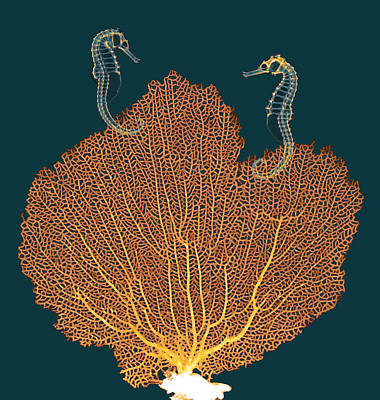Sea Fan And Seahorses, X-ray Art Print by D. Roberts