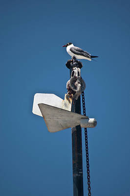 Photograph - Sea Gull And Boat Mast by Carolyn Marshall