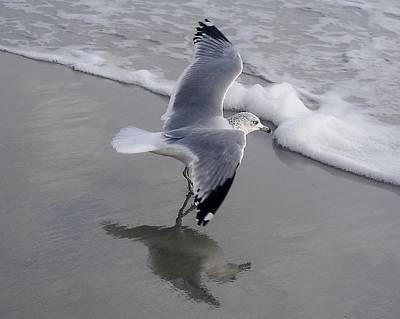 Sea Gull By The Sea Shore Art Print by Paulette Thomas