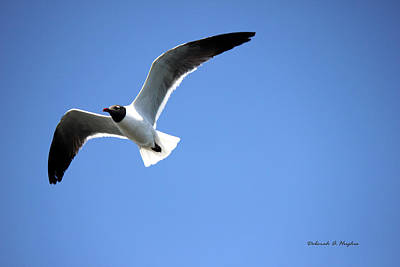 Photograph - Sea Gull by Deborah Hughes