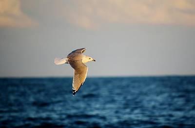 Sea Gull Over The Ocean Art Print by Paulette Thomas