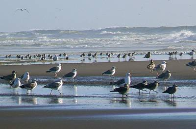 Sea Gulls And Breakers Art Print by Pamela Patch