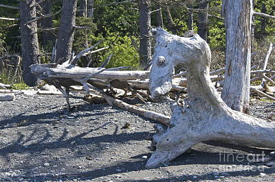 Sea Horse In A Ghost Forest Art Print