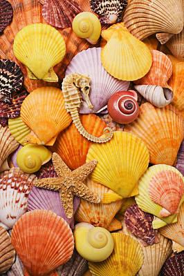 Sea Horse Starfish And Seashells  Art Print by Garry Gay