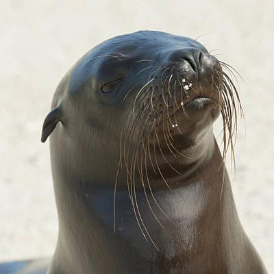 Sea Lion Galapagos, Equador Art Print