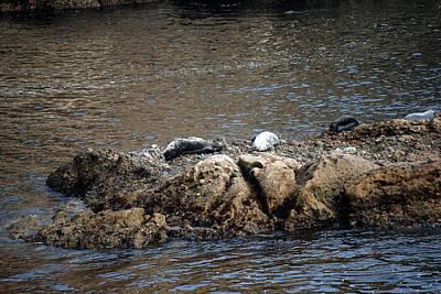Photograph - Sea Lion Rocks by Harvey Barrison