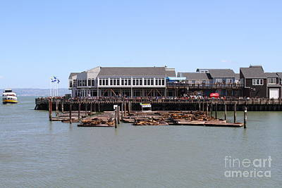 Sea Lions At Pier 39 San Francisco California . 7d14273 Art Print by Wingsdomain Art and Photography