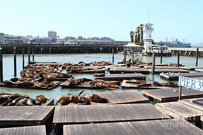 Sea Lions At Pier 39 San Francisco California . 7d14309 Art Print by Wingsdomain Art and Photography