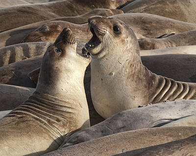 Photograph - Sea Lions  by Gregory Scott