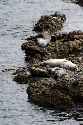 Photograph - Sea Lions Rock by Harvey Barrison