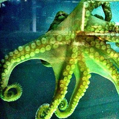 Octopus Wall Art - Photograph - Sea Monster by Casey Fessler