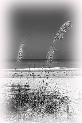 Photograph - Sea Oat Dune Grass by Danuta Bennett