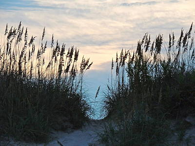 Photograph - Sea Oats At Sunset by Eve Spring