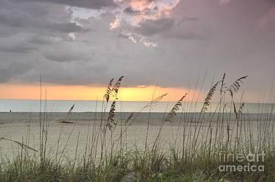 Photograph - Sea Oats - Boca Grande by John Black