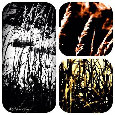 Iphone 4 Photograph - Sea Oats Three Ways #beach by Photography By Boopero