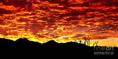 Photograph - Sea Of Red by Robert Bales