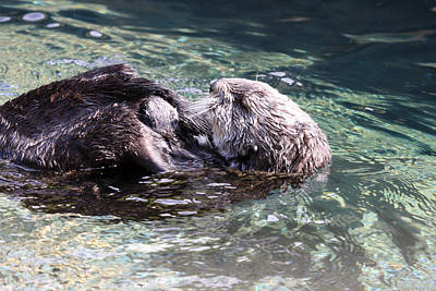Photograph - Sea Otter - 0021 by S and S Photo