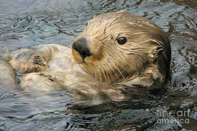 Photograph - Sea Otter by Frank Townsley