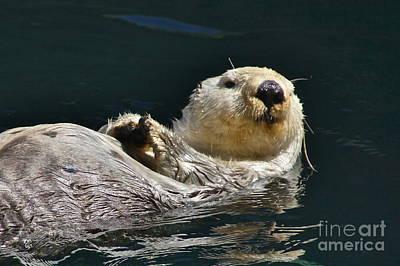 Sea Otter Art Print by Sean Griffin