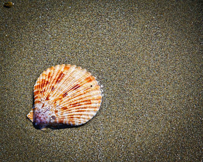 Photograph - Sea Shell by Steve McKinzie