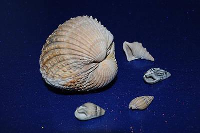 Photograph - Sea Shells by Chris Day